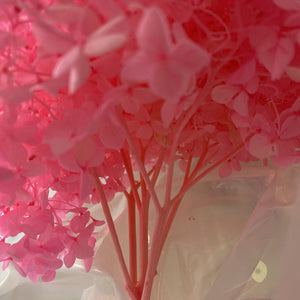 Preserved Hydrangea | Candy Pink - Magnolia Lane