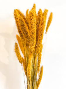Dried Millet Grass | Gold Yellow - Dried Flowers -Magnolia Lane