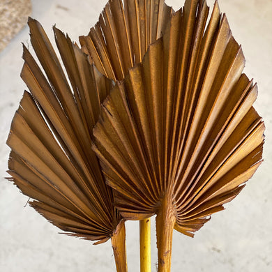Dried Palm Spear - Small | Cola - Magnolia Lane