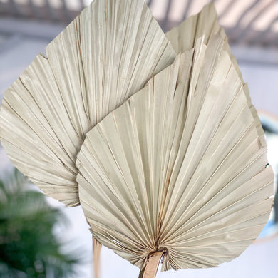 Dried Palm Spear- | Natural (currently bigger head size)Thank - Magnolia Lane