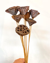 Load image into Gallery viewer, Dried Lotus Pods - Magnolia Lane