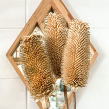 Load image into Gallery viewer, Dried Dipsacus Sativus | Natural (WS) - Magnolia Lane