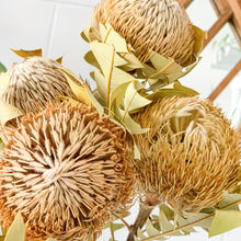 Load image into Gallery viewer, Dried Banksia Baxteri | Natural - Magnolia Lane