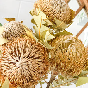 Dried Banksia Baxteri | Natural - Magnolia Lane