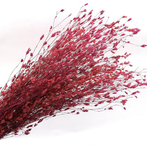 Organic Dried Wild Flowers | Hot Pink - Magnolia Lane