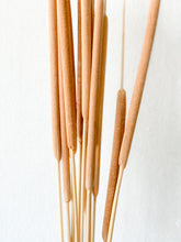 Load image into Gallery viewer, Dried Reed Spadix / Cattails | Natural - Dried Plants - Magnolia Lane