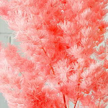 Load image into Gallery viewer, Preserved Aspargus Fern-Candy Pink - Magnolia Lane