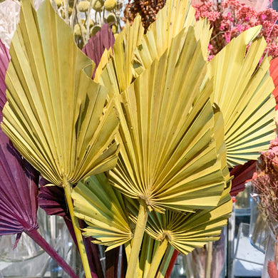 Dried Palm Spear - Small | Mustard - Magnolia Lane
