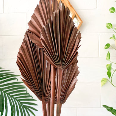 Dried Palm Spear - Small | Brown - Magnolia Lane
