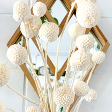 Load image into Gallery viewer, Preserved Billy Buttons | White - Magnolia Lane