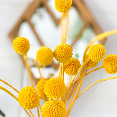 Dried Billy Buttons | Royal Yellow - Magnolia Lane