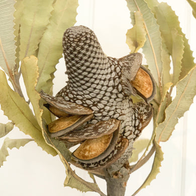 Dried Menzii Nuts - Natural | Single Stem - Magnolia Lane