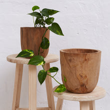 Load image into Gallery viewer, Iniko Tree Root Planter - Magnolia Lane