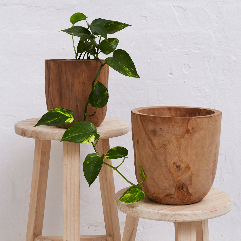 Iniko Tree Root Planter - Magnolia Lane