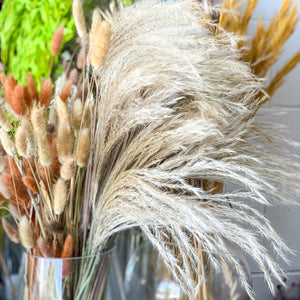 Natural Dried Pampas/Phragmites Communis Reed - Magnolia Lane