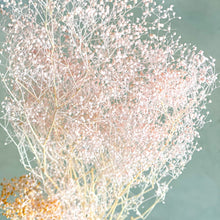 Load image into Gallery viewer, Preserved Gypsophila - Mini | Pastel Pink - Magnolia Lane
