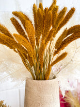 Load image into Gallery viewer, Dried Millet Grass | Gold Yellow - Dried Flowers -Magnolia Lane