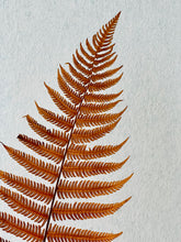 Load image into Gallery viewer, Preserved Parchment Fern | Ochre | Magnolia Lane