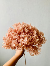 Load image into Gallery viewer, Preserved Hydrangea | Champagne | Magnolia Lane
