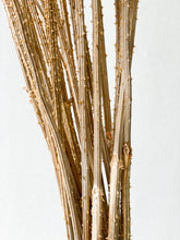 Load image into Gallery viewer, Teasel | Natural - Dried Flowers - Magnolia Lane