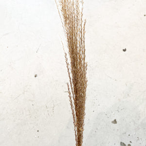 Horse Tail Whisk | Natural - Magnolia Lane