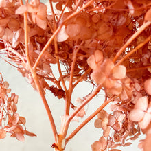 Load image into Gallery viewer, Preserved Hydrangea | Burnt Coral - Magnolia Lane