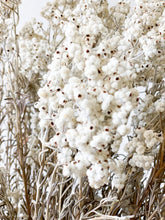 Load image into Gallery viewer, Australian Preserved Lamb's Tails - Dried Flowers - Magnolia Lane