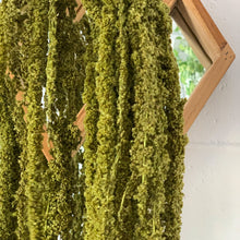 Load image into Gallery viewer, Preserved Amaranthus - Hanging | Moss - Magnolia Lane