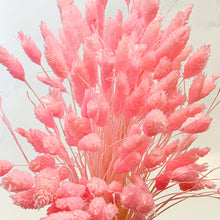 Load image into Gallery viewer, Dried Gem Grass | Fairy Floss Pink - Magnolia Lane
