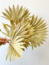Load image into Gallery viewer, Dried Sun Palm Leaves | Natural - Magnolia Lane