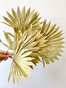 Dried Sun Palm Leaves | Natural - Magnolia Lane