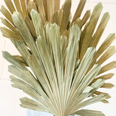 Dried Rhapis Palm Spear | Natural - Magnolia Lane