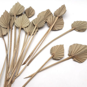 Dried Palm Spear - Mini | Natural - Magnolia Lane