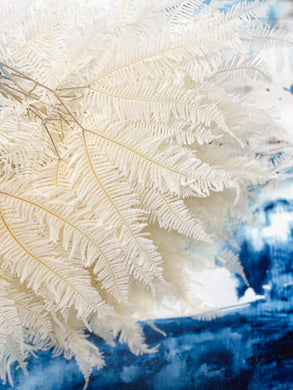 Preserved Fern - White | Angel Wings Large @55cm - Magnolia Lane