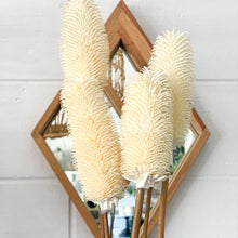 Load image into Gallery viewer, Dried Dipsacus Sativus | White - Magnolia Lane