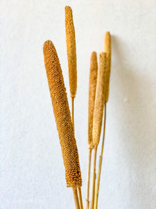 Babala Stem | Natural - Dried Plants - Magnolia Lane