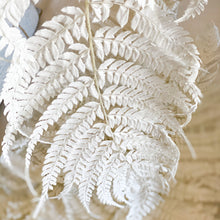 Load image into Gallery viewer, Preserved Fern - Long | White - Magnolia Lane