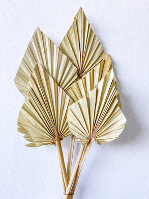 Dried Palm Spear- Small | Natural - Magnolia Lane