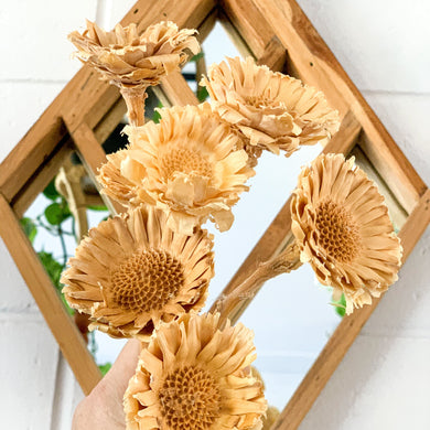 Dried Sun Chrysanthemum | White - Magnolia Lane