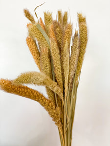 Dried Millet Grass | Natural - Dried Flowers - Magnolia Lane