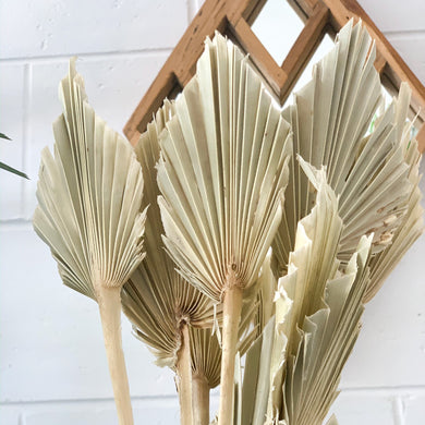 Dried Palm Spear | Natural Bleached - Magnolia Lane