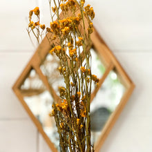 Load image into Gallery viewer, Dried Australian Daisy | Gold - Magnolia Lane