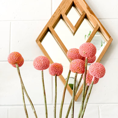 Dried Billy Buttons | Pink - Magnolia Lane