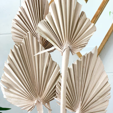 Dried Palm Spear - Small | Oyster - Magnolia Lane