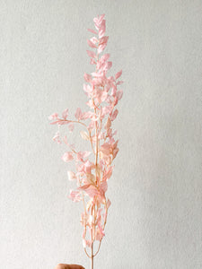 Preserved Ruscus | Shades of Pink - Dried Flowers - Magnolia Lane