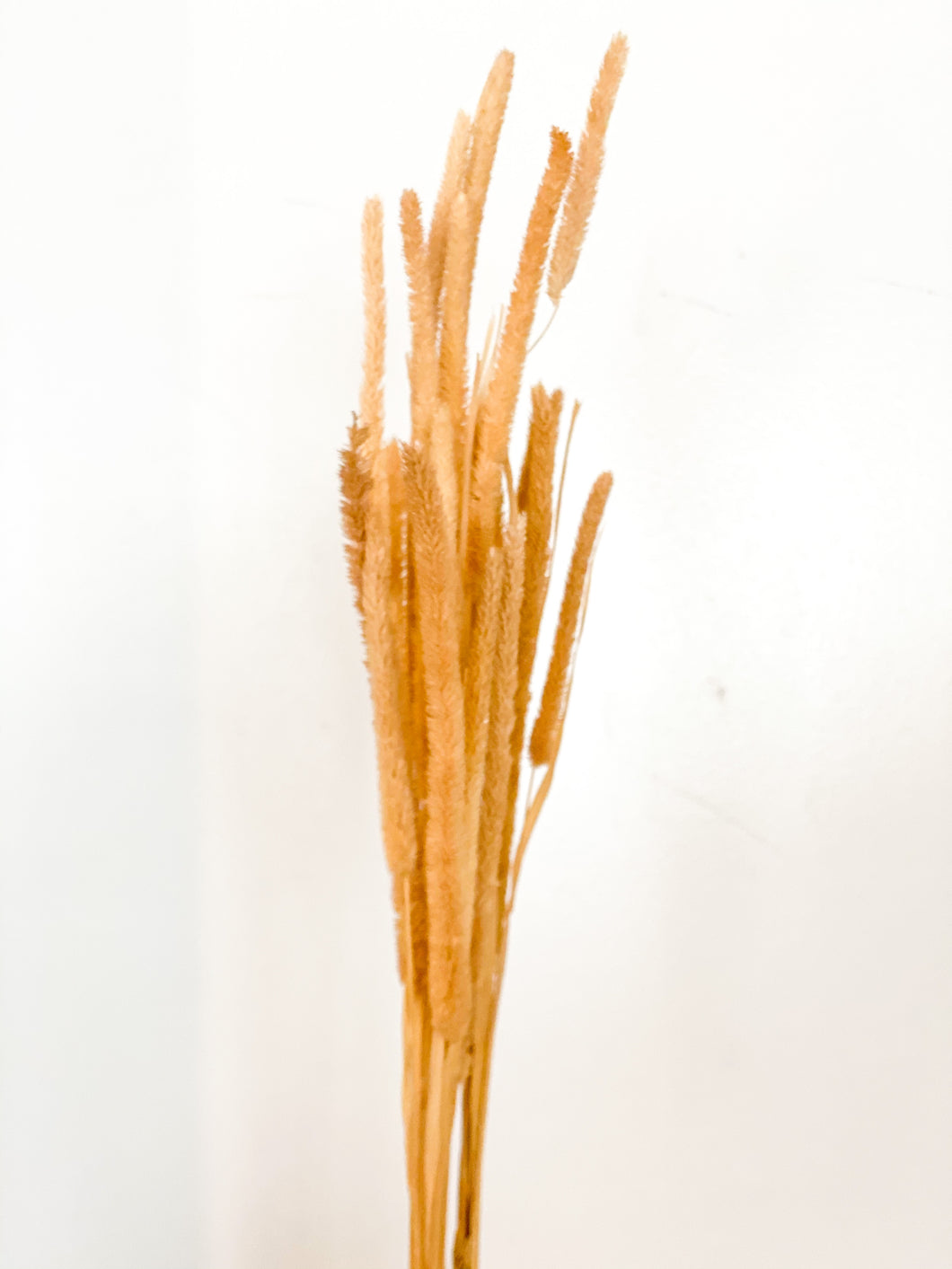 Dried Wild Grass | Natural