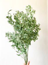 Load image into Gallery viewer, Preserved Ruscus | Matte Green/Marble White - Dried + Preserved Plants - Magnolia Lane