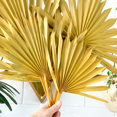Dried Sun Palm Leaves | Mustard - Magnolia Lane