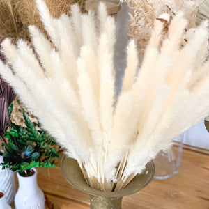 Natural Dried Pampas Grass | Small | White - Magnolia Lane