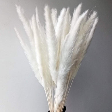 Natural Dried Pampas Grass | Small | White-Magnolia Lane-Magnolia Lane